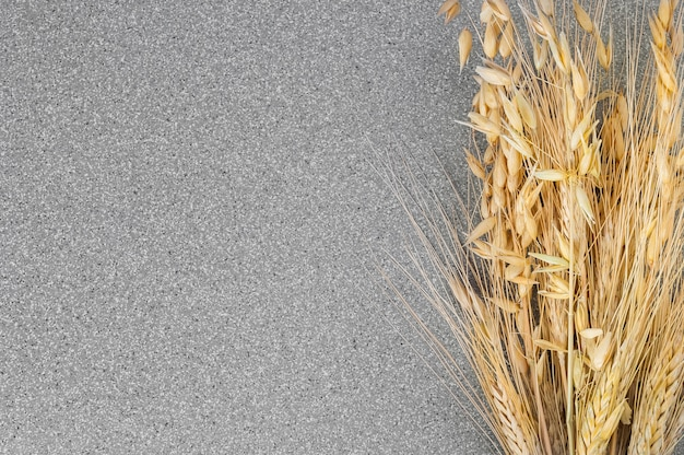 Spikes of wheat and barley on a background of gray granite. Premium Photo