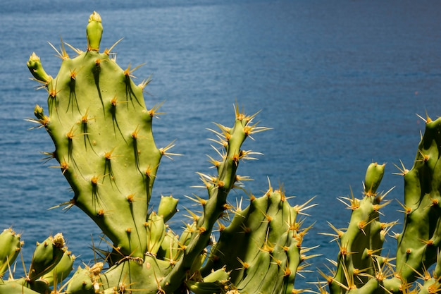 Spiky cactus leaves with the sea Free Photo