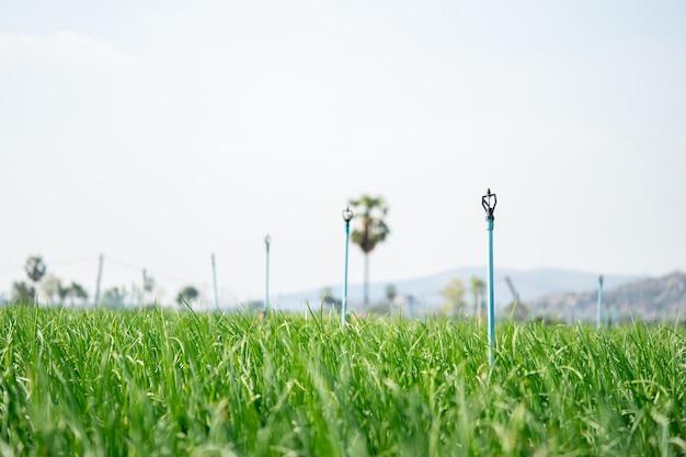Системы водоснабжения фермеров spinger помогают воде хорошо распределяться и экономят время полива для фермеров. Premium Фотографии
