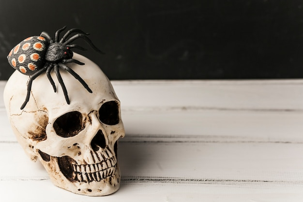Spooky Skull With Spider On Top Free Photo