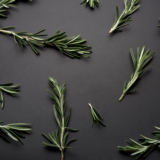 Sprig of rosemary spread on black background Free Photo