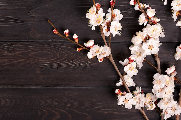 Sprigs of the apricot tree with flowers on wooden background. Premium Photo