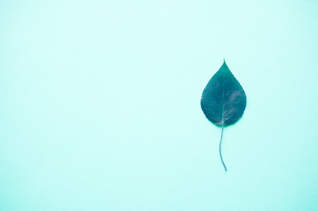 Spring or autumn, purple or blue leaf lies on a blue pastel, close-up. textured background. copyspace Premium Photo