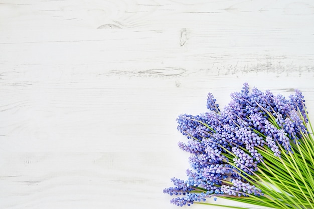 Spring background blue muscari flowers on white wooden background Premium Photo
