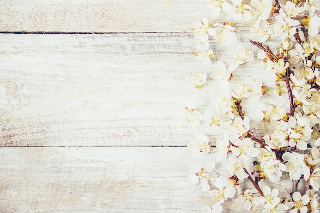 Spring background, flowers and tea. selective focus. Premium Photo