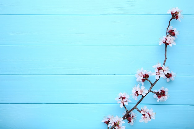 Spring blooming branches on blue wooden background with copyspace. Premium Photo