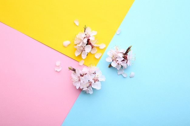 Spring blooming branches on a colorful background. Premium Photo