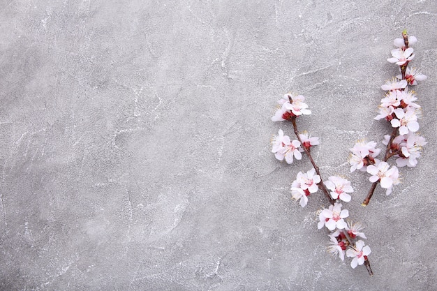 Spring blooming branches on a grey concrete background. Premium Photo