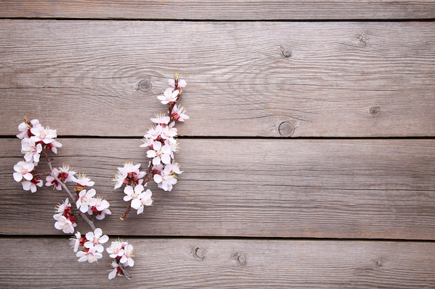 Spring blooming branches on grey wooden background. Premium Photo