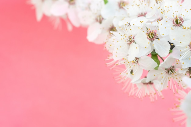 Spring . cherry blossom trees Premium Photo