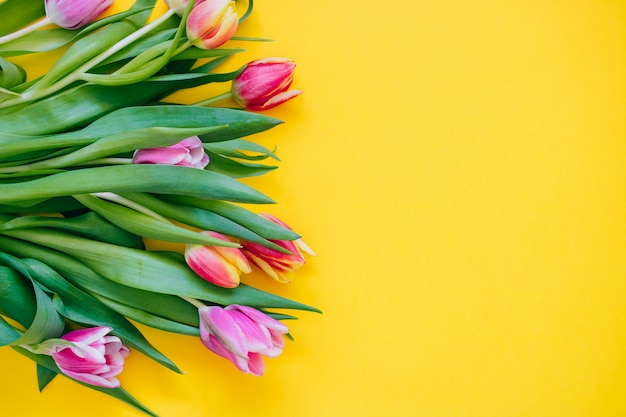 Spring concept. pink and red tulips on yellow background. copy space, flat lay. Premium Photo