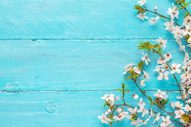Spring flowers cherry blossoming on blue wooden background. top view with copy space Premium Photo