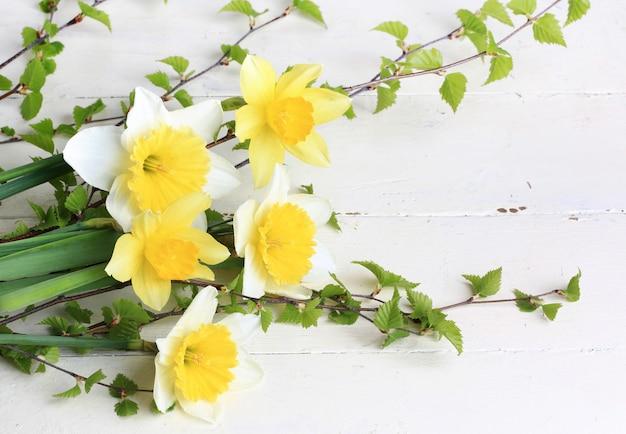 春の花水仙白樺の枝白背景 Premium写真