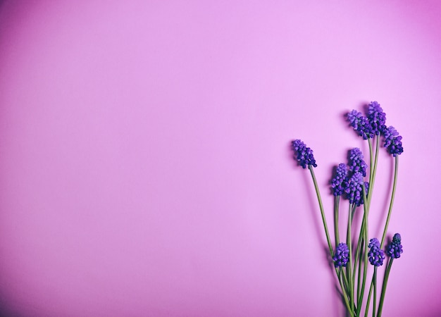 Spring flowers on a pink surface Premium Photo