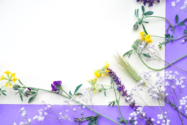 Spring flowers on white and purple backdrop Free Photo