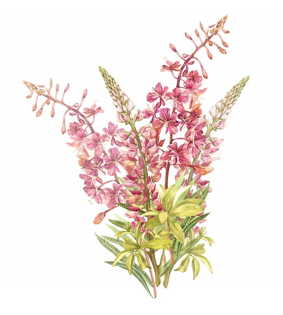 Spring flowers willow-nerb and lupine tree isolated. watercolor hand drawn illustration. Premium Photo