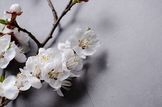 Spring flowers with branches blossoming apricots on grey background Premium Photo