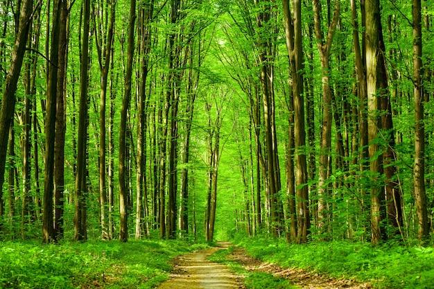 春の森の木。自然緑の木の日光。空 Premium写真