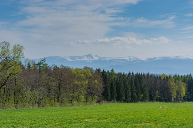 Spring landscape. field of sown oats, forest and mountains. Premium Photo