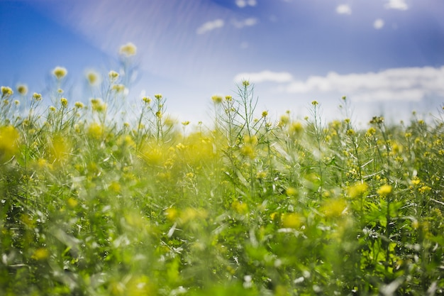 Spring landscape on a sunny day Free Photo