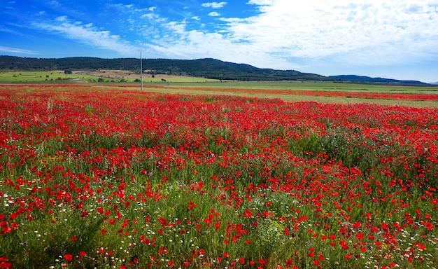 Spring meadow camino santiago levante Premium Photo