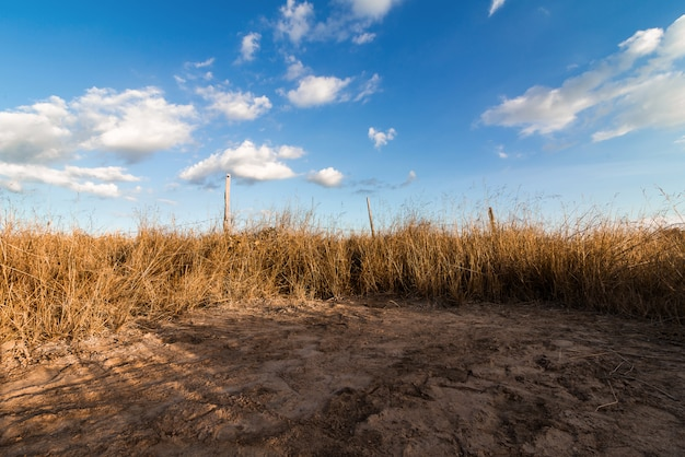Spring or summer abstract nature with grass and blue sky in the back Premium Photo
