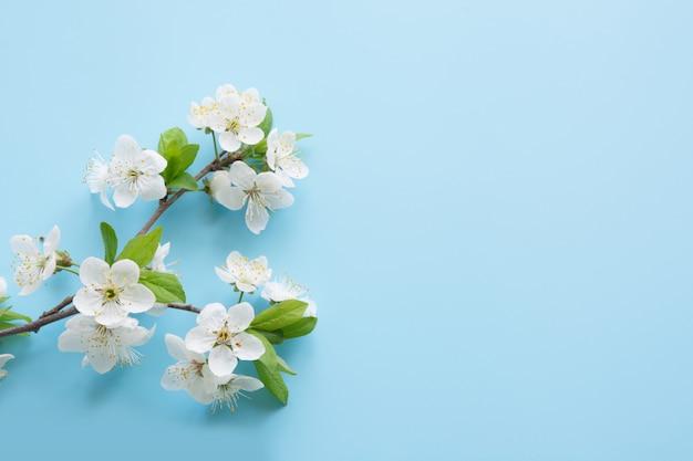 Spring white blossom branches on blue. Premium Photo