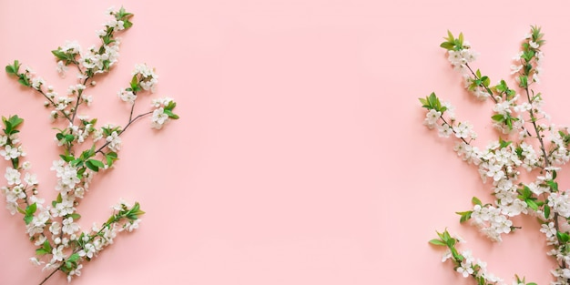 Spring white blossom branches on pink. Premium Photo