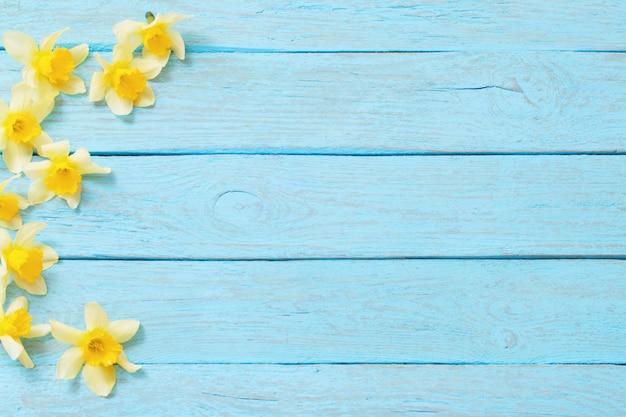 青い木製の背景に春の黄色い水仙 Premium写真