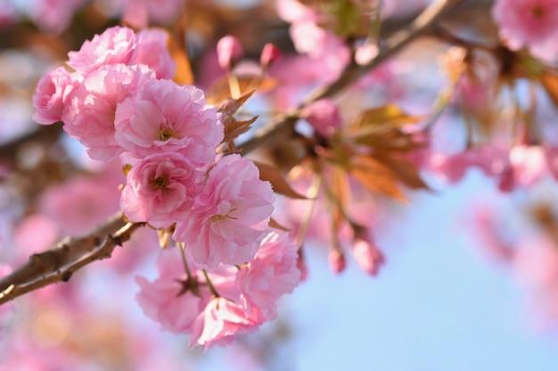 Springtime. красивые цветочные весной абстрактного фона природы. цветущие ветви деревьев для sp Бесплатные Фотографии