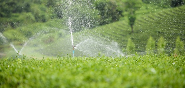 Sprinkler system in a farm field. Premium Photo