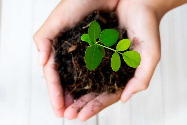 Sprout plant and soil holding in hands. tree growing and prevent by human. Premium Photo