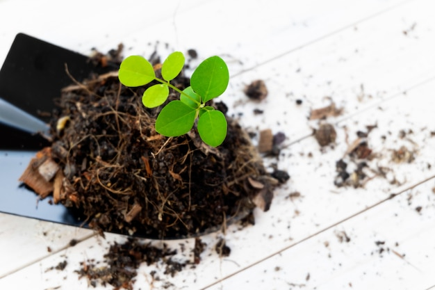 Sprout plant and soil holding in shovel. tree growing and prevent by human. Premium Photo