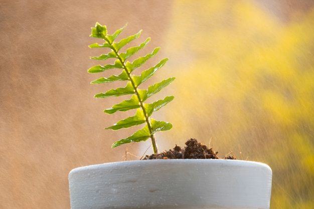 Sprout plant and soil in tree pot with water spray on background. Premium Photo