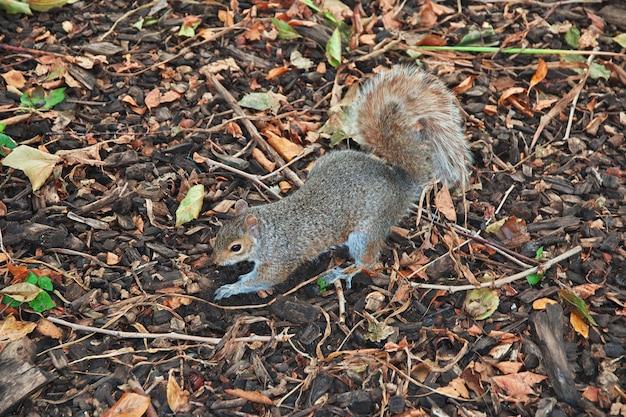 Squirrel in new york city, united states Premium Photo