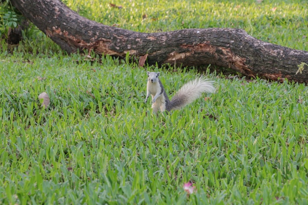 Squirrel playing in a botanical garden Premium Photo