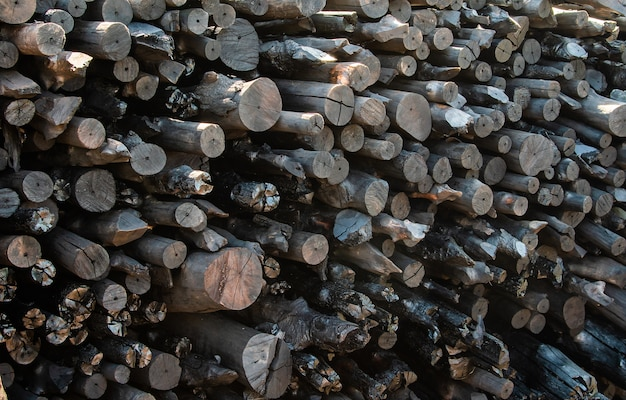 A stack of mangrove woods at charcoal factory Photo | Premium Download