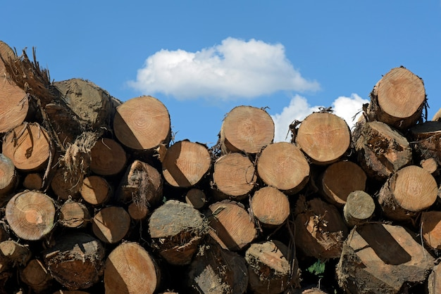 Stack of wood logs under blue sky Premium Photo