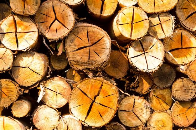 Сложенные бревна, готовые к продаже - сложенная древесина на ферме Premium Фотографии