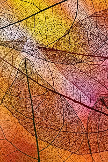 オレンジ色のバックライト付きの積み重ねられた透明な葉 無料写真