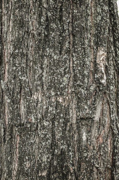 Stained wood pine plank construction Free Photo