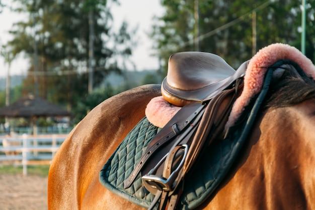 stallion black equine race sky Free Photo