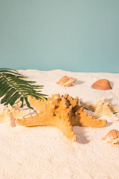 Starfish on sunny beach Free Photo