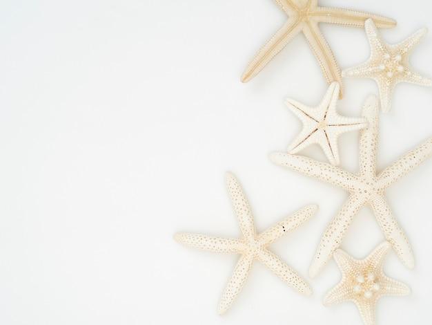 Starfish on a white background. Premium Photo