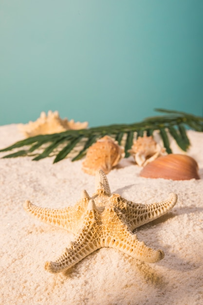 Starfish with shells and leaves on sandy beach Free Photo
