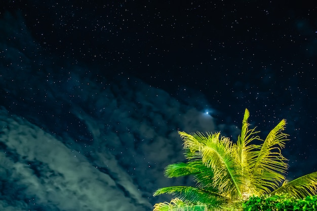 The starry sky with coconut in the night Premium Photo