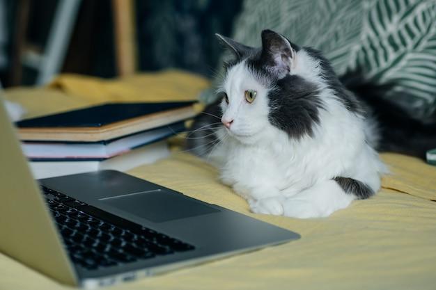 Оставайтесь дома, оставайтесь в безопасности концепции. кошка за компьютером во время карантина и самоизоляции во время эпидемии коронавируса. Premium Фотографии