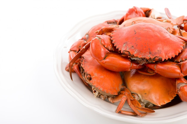 Steamed crabs on white plate Free Photo