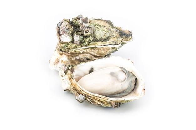 Le ostriche cotte al vapore vengono poste sul dorso bianco Foto Gratuite
