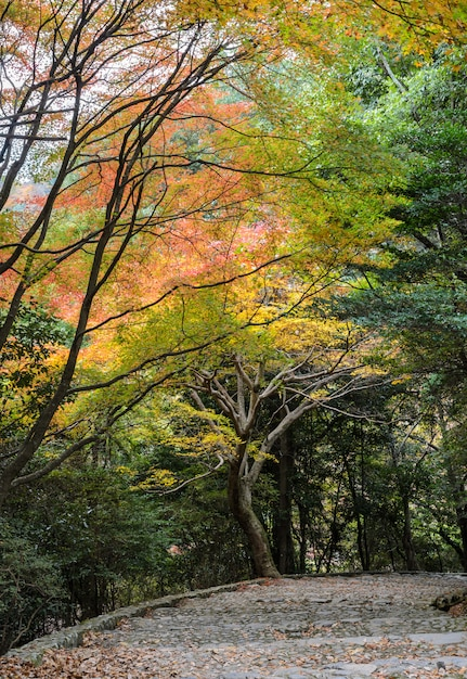 Steps leading down with autumn colored leaves in arashiyama,  kyoto, japan Premium Photo